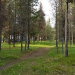 Path in Yellowstone RV Park